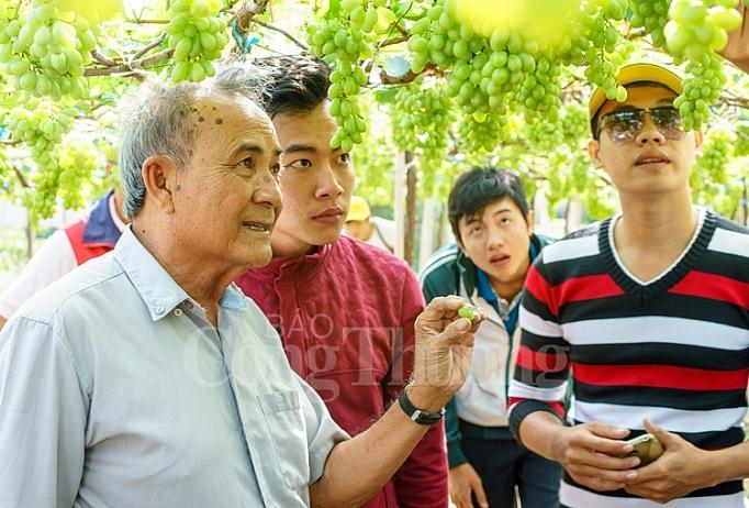 Nho Ba Mọi thương hiệu nỗi tiếng về nho Ninh Thuận