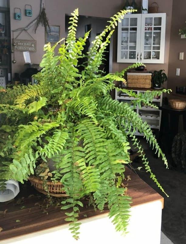 10 loại cây hút không khí ẩm trong nhà
